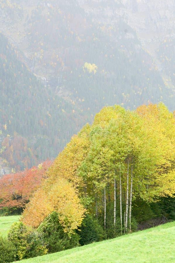 δάσος πτώσης στοκ φωτογραφίες με δικαίωμα ελεύθερης χρήσης