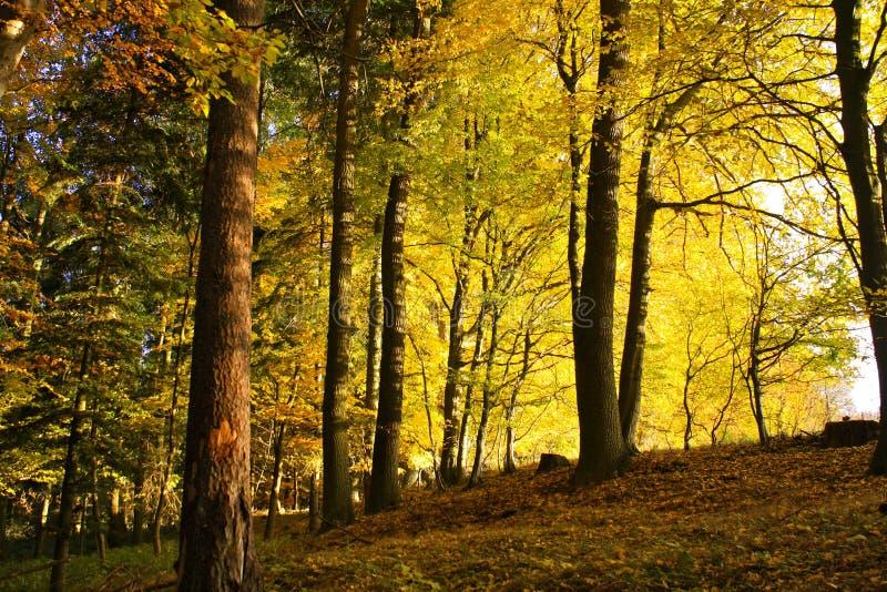 δάσος πτώσης στοκ εικόνα με δικαίωμα ελεύθερης χρήσης
