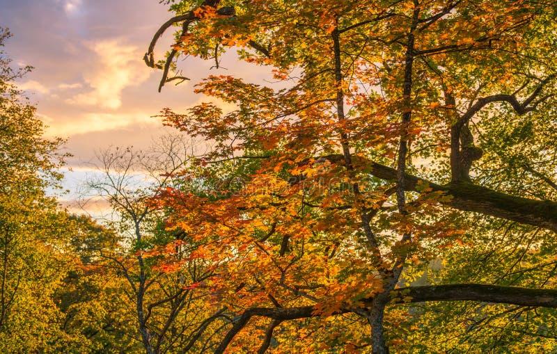 Δάσος πτώσης στοκ εικόνες με δικαίωμα ελεύθερης χρήσης
