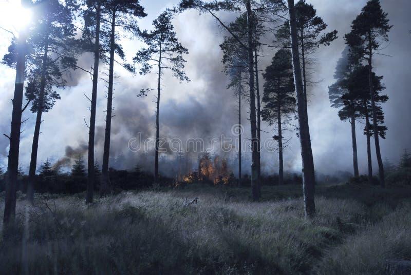 δάσος πυρκαγιάς στοκ εικόνα