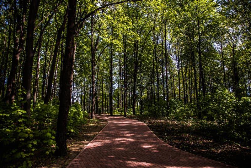 Δάσος πόλεων στοκ φωτογραφία με δικαίωμα ελεύθερης χρήσης
