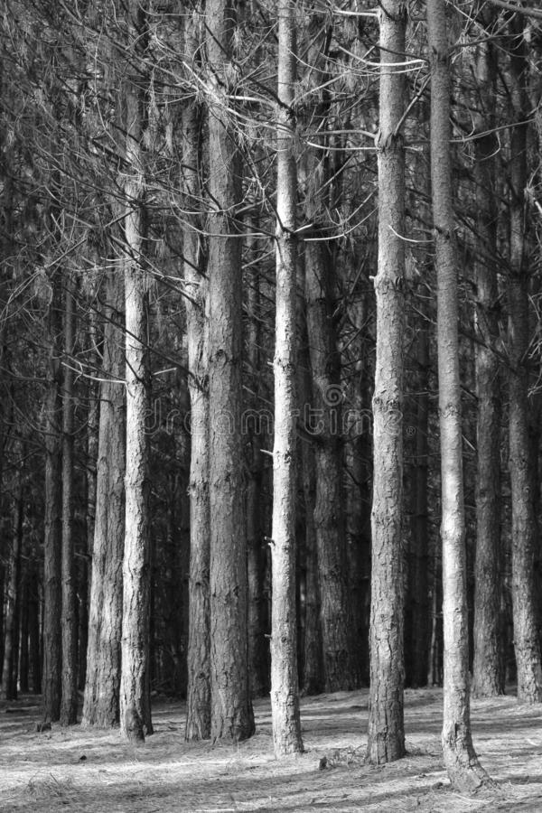 Δάσος σε γραπτό στοκ φωτογραφία με δικαίωμα ελεύθερης χρήσης