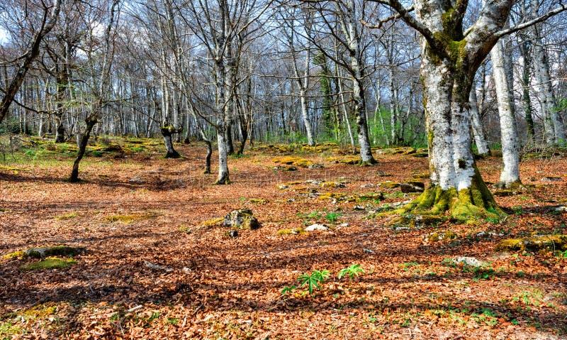 Δάσος σε Monte Σαντιάγο στοκ εικόνες