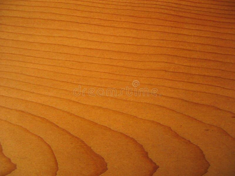 δάσος σιταριού στοκ φωτογραφία με δικαίωμα ελεύθερης χρήσης