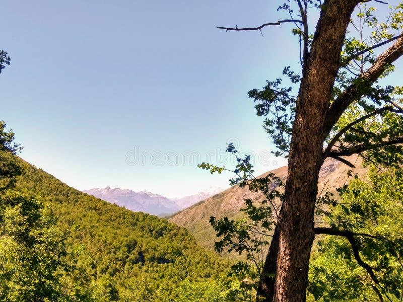 Δάσος στα βουνά των Άνδεων στη Χιλή στοκ φωτογραφίες με δικαίωμα ελεύθερης χρήσης