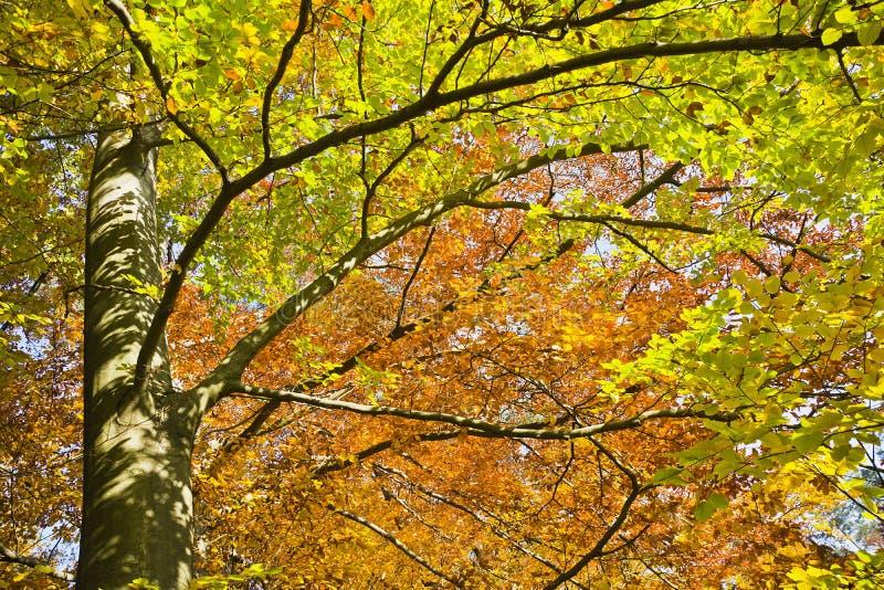 Download Δάσος στα όμορφα χρώματα φθινοπώρου μια ηλιόλουστη ημέρα Στοκ Εικόνες - εικόνα από έξυπνο, sunlight: 62716816