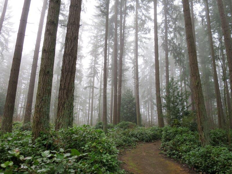 Δάσος στην ομίχλη στοκ εικόνες με δικαίωμα ελεύθερης χρήσης