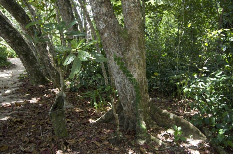 Δάσος στη Κόστα Ρίκα στοκ φωτογραφία