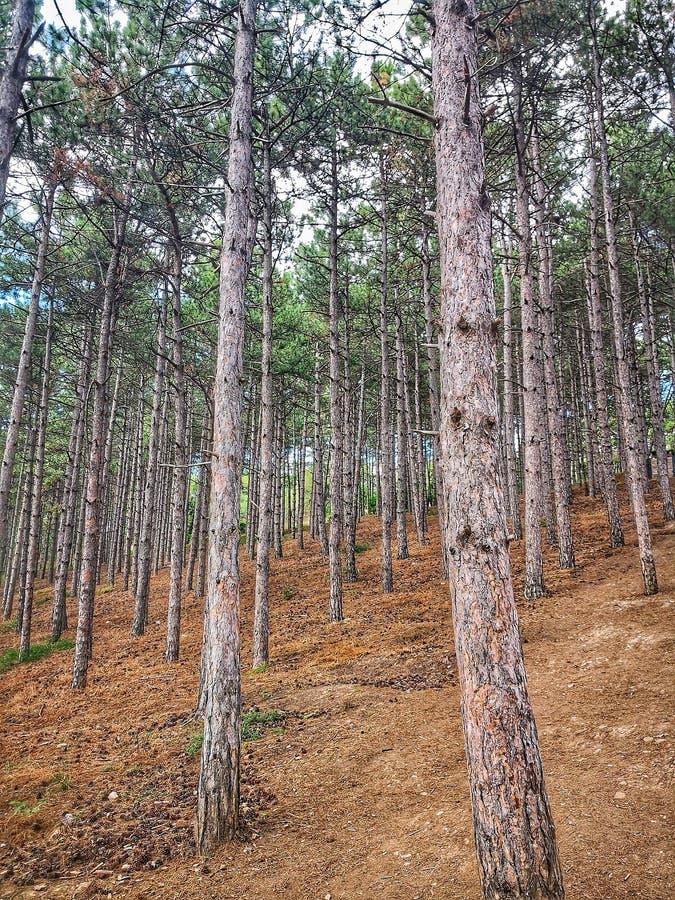 Δάσος στη Μακεδονία στοκ εικόνες με δικαίωμα ελεύθερης χρήσης