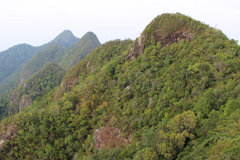 Δάσος στο βουνό στοκ φωτογραφία με δικαίωμα ελεύθερης χρήσης
