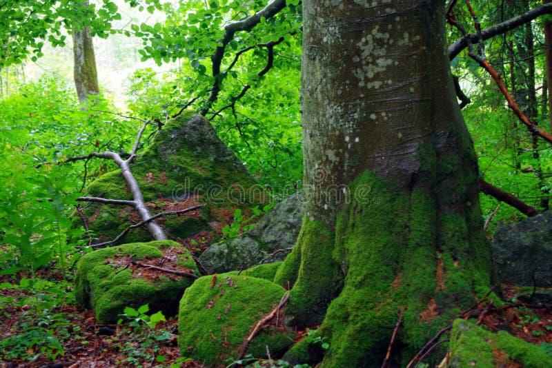 Δάσος στο εθνικό πάρκο στοκ φωτογραφία με δικαίωμα ελεύθερης χρήσης