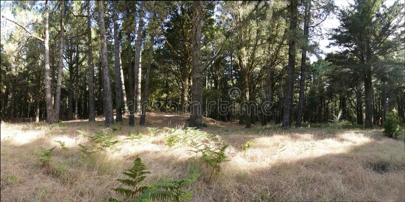 Δάσος στο Λα Palma στοκ εικόνα