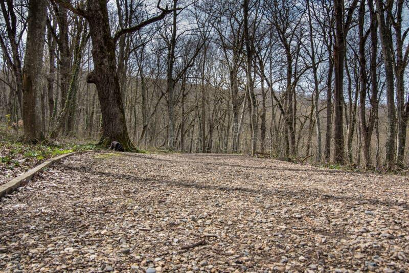 Δάσος στο πάρκο στο βουνό την άνοιξη, τη νέα χλόη και τα λουλούδια, ξηροί κλάδοι στοκ εικόνες