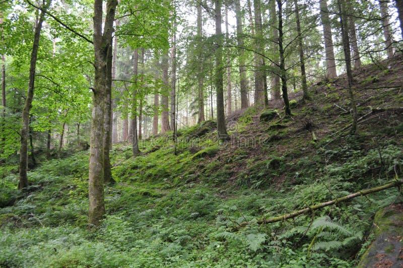 Δάσος στο Χάιλαντς της Σκωτίας στοκ φωτογραφία