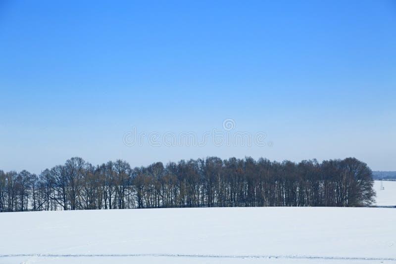 Δάσος στο χειμερινό τοπίο στοκ φωτογραφία
