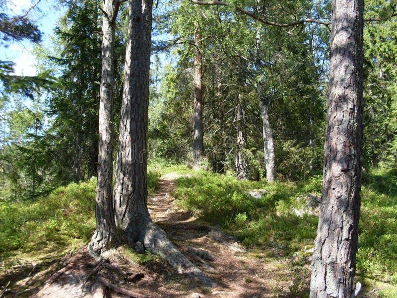 Δάσος στο Όσλο στοκ φωτογραφίες με δικαίωμα ελεύθερης χρήσης