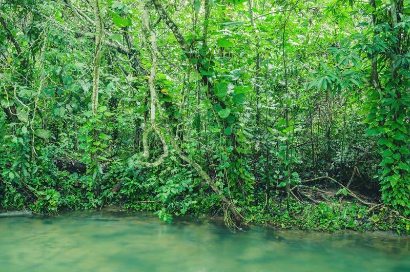 Δάσος στο margim του ποταμού Formoso στην παλαμίδα - κράτη μέλη, Βραζιλία στοκ φωτογραφίες