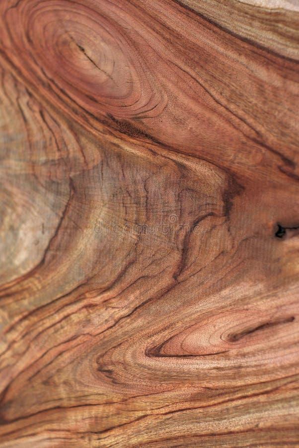 δάσος σύστασης δαφνών καμφοράς στοκ φωτογραφίες