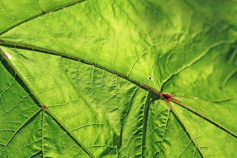 δάσος σύστασης φύλλων στοκ φωτογραφία με δικαίωμα ελεύθερης χρήσης