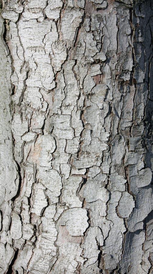δάσος σύστασης στοκ εικόνα