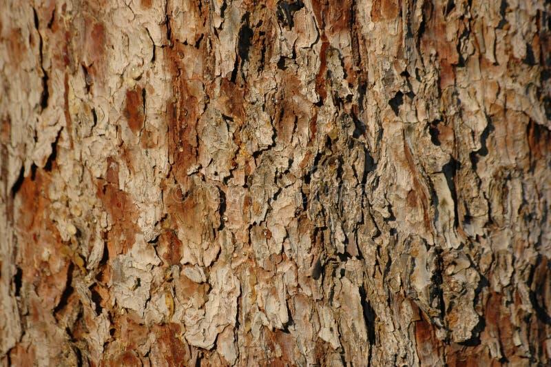 Download δάσος σύστασης στοκ εικόνες. εικόνα από δέντρο, αδελφών - 1534224