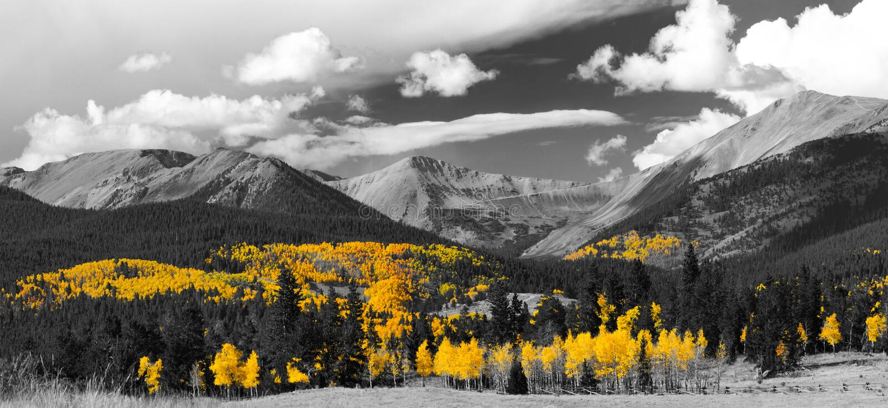 Δάσος της Aspen πτώσης στο γραπτό πανοραμικό βουνό Landscap στοκ εικόνες