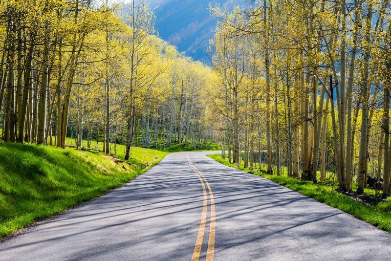 Δάσος της Aspen στοκ εικόνες με δικαίωμα ελεύθερης χρήσης