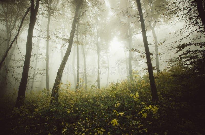 Δάσος της Misty με τη απόκοσμη ατμόσφαιρα το φθινόπωρο στοκ εικόνες
