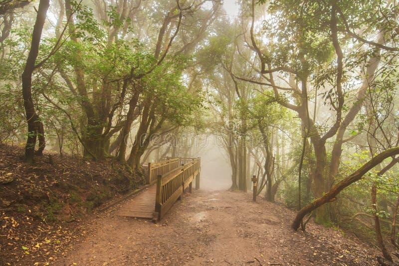 Δάσος της Misty στα βουνά Anaga, Tenerife, Κανάριο νησί, Ισπανία στοκ εικόνες