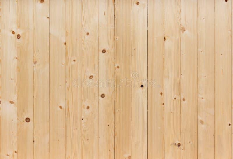 δάσος τοίχων πεύκων στοκ εικόνες με δικαίωμα ελεύθερης χρήσης