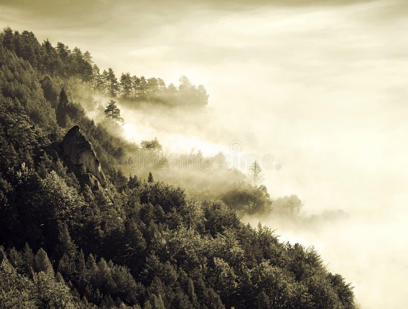 Δάσος τοπίων φύσης στοκ εικόνα με δικαίωμα ελεύθερης χρήσης