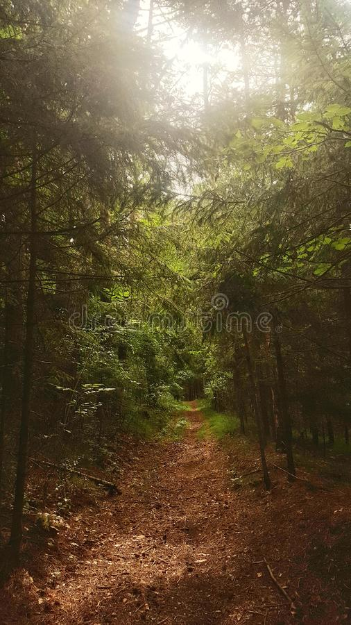 Δάσος το καλοκαίρι στοκ φωτογραφία