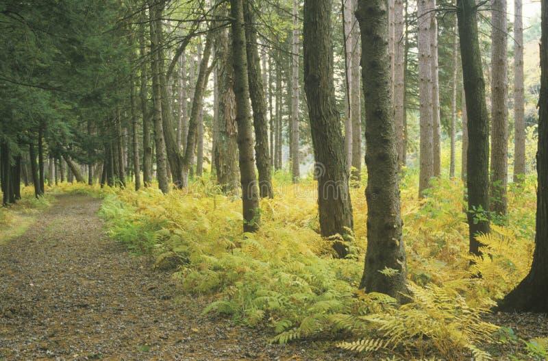 Δάσος το φθινόπωρο, Νέα Αγγλία στοκ εικόνες