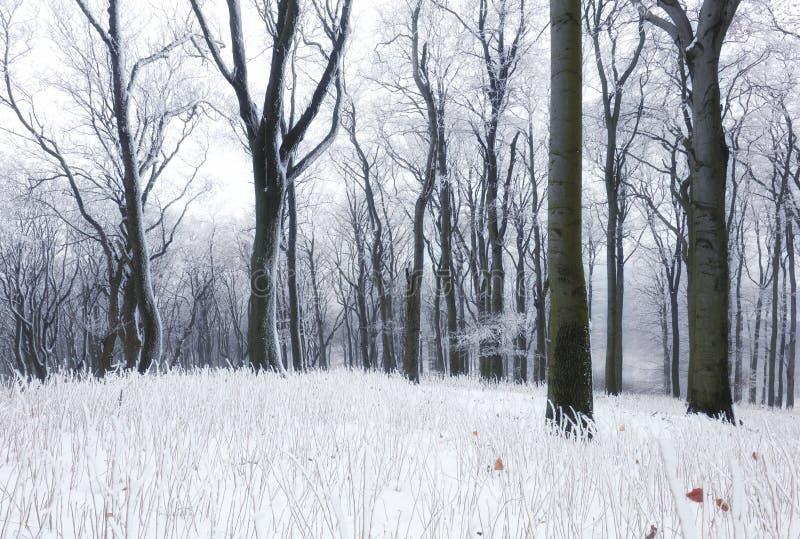 Δάσος το χειμώνα με ομίχλη και χιόνι στοκ φωτογραφία με δικαίωμα ελεύθερης χρήσης