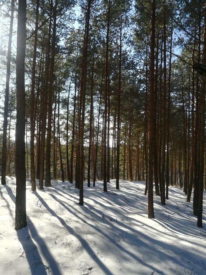 Δάσος το χειμώνα στοκ φωτογραφίες