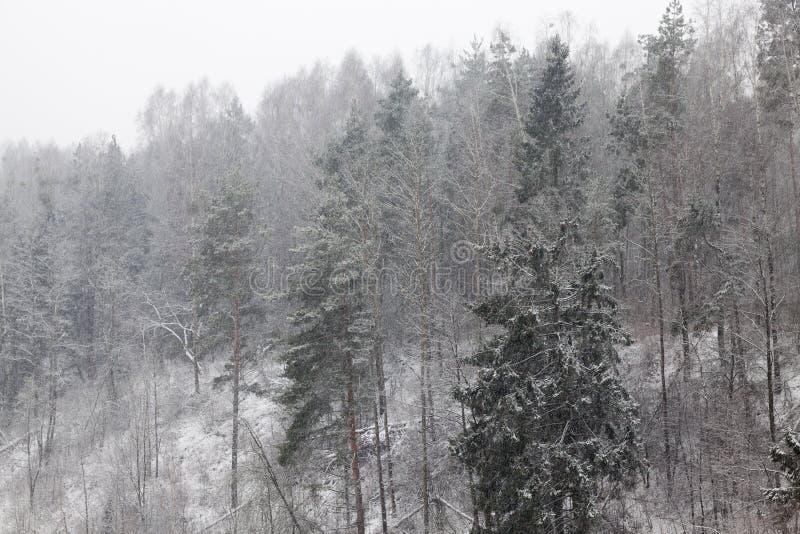 Δάσος το χειμώνα στοκ εικόνες με δικαίωμα ελεύθερης χρήσης