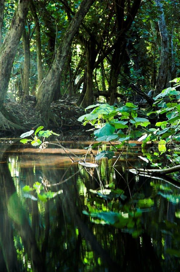 δάσος τροπικό στοκ εικόνες με δικαίωμα ελεύθερης χρήσης