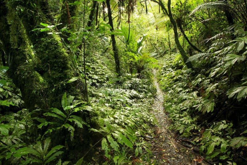 δάσος τροπικό στοκ φωτογραφίες