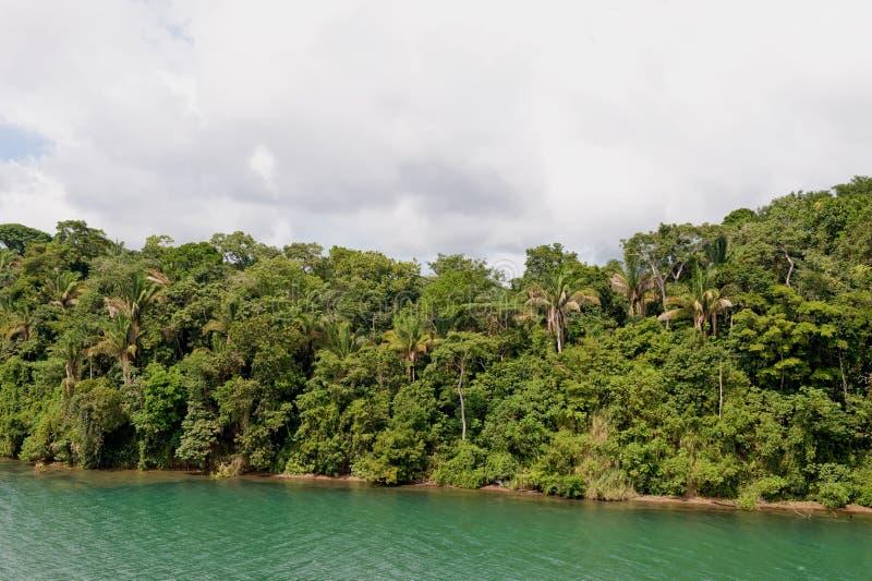 δάσος τροπικό στοκ εικόνες