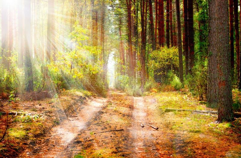 Δάσος φθινοπώρου. Πτώση στοκ φωτογραφίες