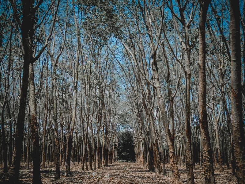 Δάσος φθινοπώρου στην Ταϊλάνδη στοκ φωτογραφία