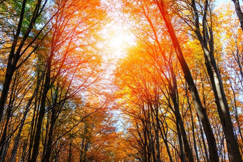 Δάσος φθινοπώρου στην Τρανσυλβανία στοκ φωτογραφία με δικαίωμα ελεύθερης χρήσης