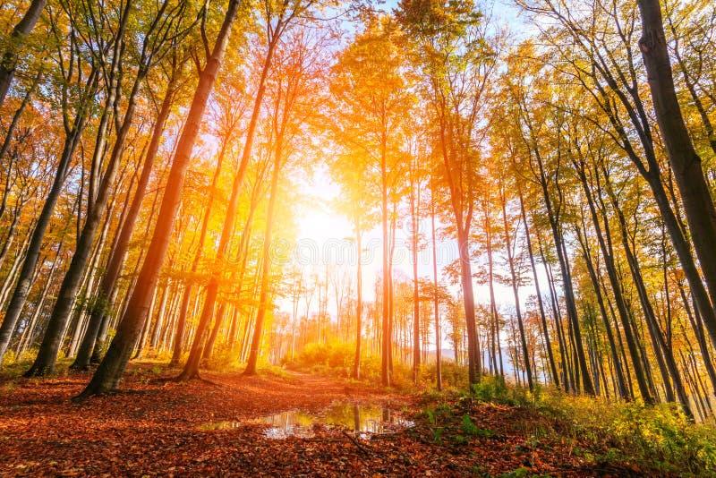 Δάσος φθινοπώρου στην Τρανσυλβανία στοκ εικόνες