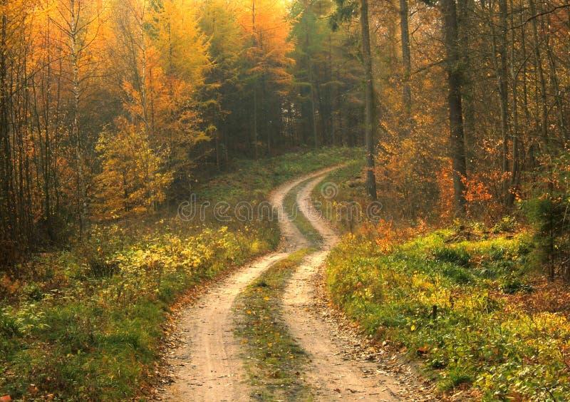 Download δάσος φθινοπώρου στοκ εικόνες. εικόνα από φύλλο, φως, παλαιός - 1533600