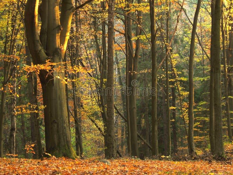 Download δάσος φθινοπώρου στοκ εικόνα. εικόνα από φρέσκος, οικολογία - 1534605