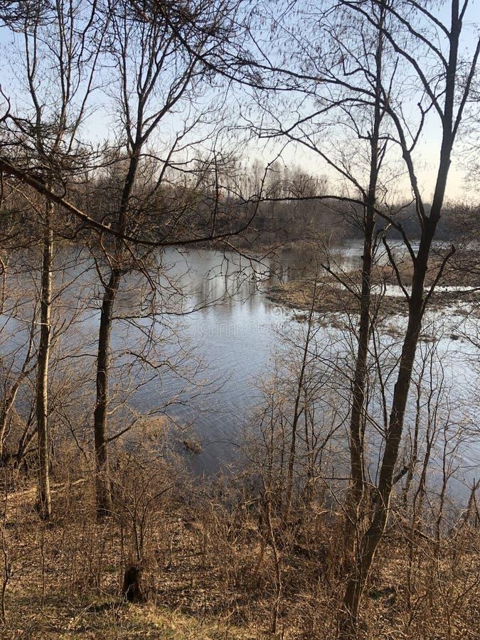 Δάσος, φθινόπωρο, πεσμένα φύλλα, ποταμός, φύση στοκ εικόνες με δικαίωμα ελεύθερης χρήσης