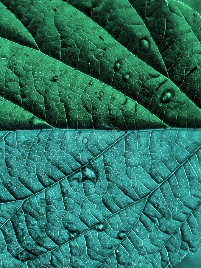 δάσος φύλλων στοκ φωτογραφία