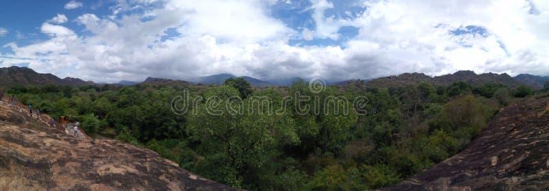 Δάσος φύσης στοκ εικόνες