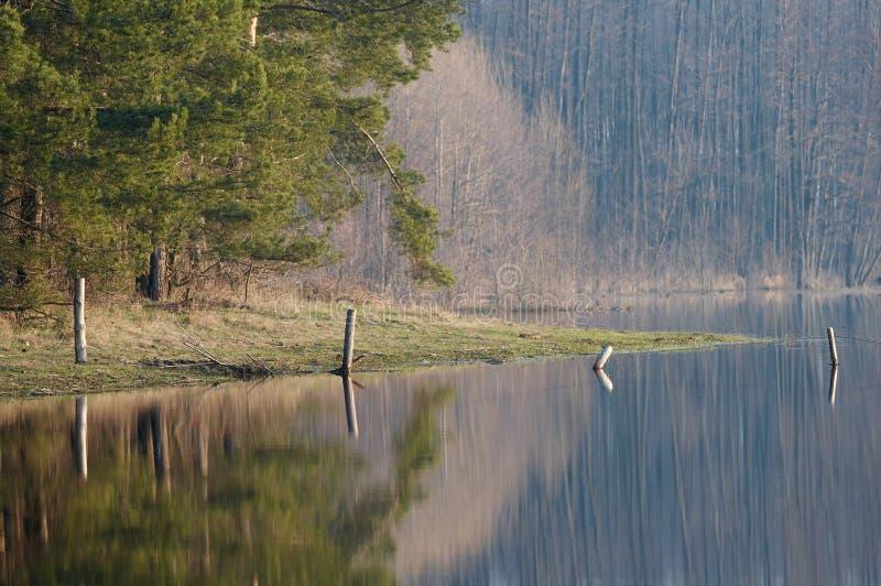 Download δάσος στοκ εικόνες. εικόνα από σκηνή, daylight, άνοιξη - 2225710