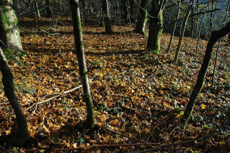 Download δάσος στοκ εικόνες. εικόνα από κραχτών, υπαίθρια, φύλλα - 381306